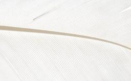 Fondo abstracto macro blanco de la pluma de pájaro Fotos de archivo libres de regalías