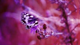 Fondo abstracto púrpura, mariposa Imágenes de archivo libres de regalías