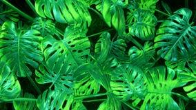 Fondo abstracto verde de las plantas metrajes