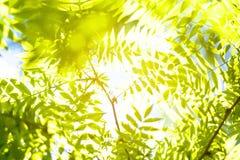 Fondo abstracto verde del follaje Imagen de archivo libre de regalías