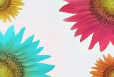 Fondo abstracto y vibrante del girasol Fotos de archivo libres de regalías