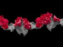 Fondo adornado floral Fotografía de archivo libre de regalías