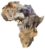 Fondo africano de la fauna Fotografía de archivo