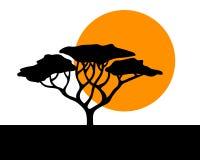Fondo africano del acacia del vector Imágenes de archivo libres de regalías
