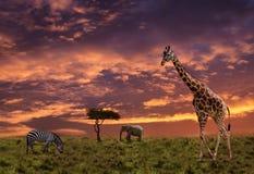 Fondo africano di tramonto con gli animali immagini stock libere da diritti