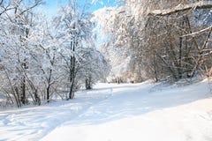 Fondo agradable del invierno Fotografía de archivo libre de regalías