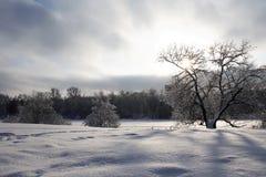 Fondo agradable del invierno Foto de archivo
