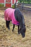 Fondo agricolo con il pascolo del cavallo Immagini Stock