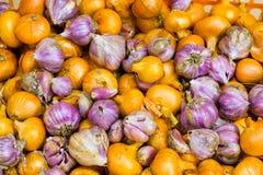 Fondo agricolo, mazzo di aglio variopinto e cipolle su un mucchio Fotografie Stock Libere da Diritti