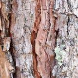Fondo agrietado de madera de Brown Imágenes de archivo libres de regalías