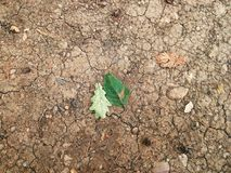 Fondo agrietado sucio del suelo con las hojas Imagen de archivo libre de regalías