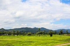 Fondo al aire libre de la naturaleza del parque del campo del arroz de montaña Imagenes de archivo