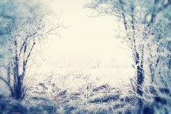 Fondo al aire libre del paisaje de la naturaleza del invierno hermoso con nieve y árboles cubiertos en la escarcha blanca en jard Fotografía de archivo libre de regalías