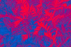 Fondo alegre, colorido de plantas imagen de archivo libre de regalías