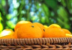 Fondo alto e macro di fine di piccola dimensione arancio della merce nel carrello della foto Fotografia Stock