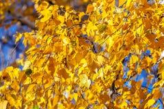 Fondo amarillo brillante del otoño Imagen de archivo