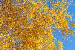 Fondo amarillo brillante del otoño Fotografía de archivo