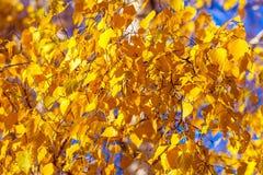 Fondo amarillo brillante del otoño Foto de archivo libre de regalías