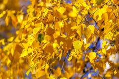 Fondo amarillo brillante del otoño Imágenes de archivo libres de regalías