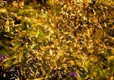 Fondo amarillo caótico del extracto del verano de la hierba Fotos de archivo