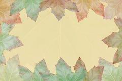 Fondo amarillo con las hojas Fotos de archivo libres de regalías