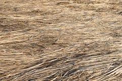 Fondo amarillo de hierba seca Foto de archivo