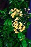 Fondo amarillo de la flor y de la hoja Imagen de archivo libre de regalías