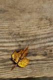 Fondo amarillo de la hoja y de madera Imágenes de archivo libres de regalías