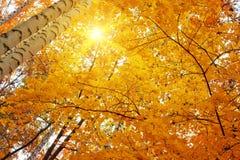 Fondo amarillo del otoño Imágenes de archivo libres de regalías