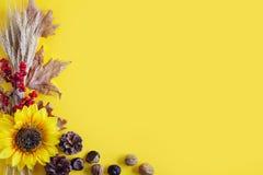 Fondo amarillo del otoño Festival de la cosecha del otoño Fotografía de archivo libre de regalías