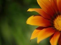 Fondo amarillo del verde de la flor Fotografía de archivo libre de regalías