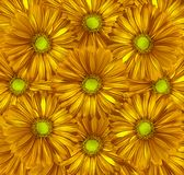 Fondo amarillo-naranja floral Un ramo de flores de gerberas del amarillo del otoño Primer Fotos de archivo