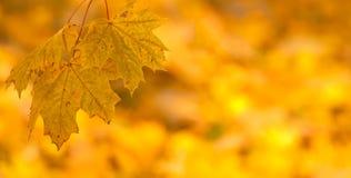 Fondo anaranjado de hojas de otoño Foto de archivo libre de regalías
