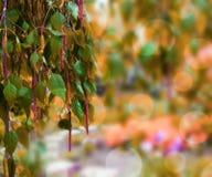 Fondo anaranjado de la naturaleza Foto de archivo libre de regalías