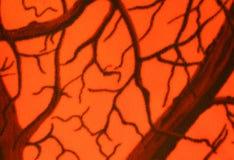 Fondo anaranjado del camuflaje Foto de archivo libre de regalías