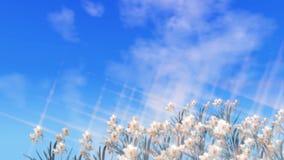 Fondo animado de la primavera con las nubes móviles en el cielo y los narcisos móviles