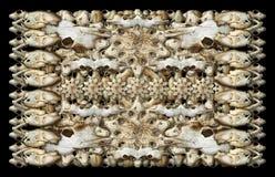 Fondo animal de los cráneos Imagen de archivo libre de regalías