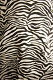 Fondo animato della zebra Immagine Stock