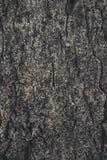 fondo approssimativo incrinato della corteccia di albero fotografia stock