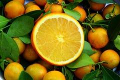 Fondo arancio Fotografia Stock