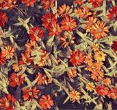 Fondo arancio del fiore Fotografia Stock Libera da Diritti
