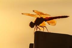 Fondo arancio della libellula, siluetta immagini stock libere da diritti