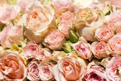 Fondo arancio delle rose immagine stock