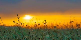 Fondo arancio di tramonto del fuoco di timore della siluetta dell'erba fotografie stock libere da diritti