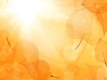 Fondo arancione scuro dalle foglie sottili Fotografie Stock Libere da Diritti