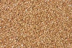 Fondo arrostito di struttura del grano saraceno nutrizione bio- Ingrediente di alimento naturale fotografia stock