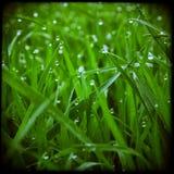 Fondo artistico dell'erba verde Fotografia Stock