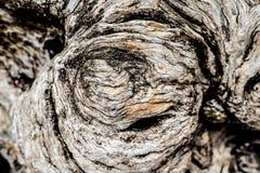Fondo ascendente de la textura del cierre de la corteza de árbol Imagen de archivo