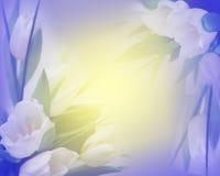 Fondo asoleado de los tulipanes foto de archivo