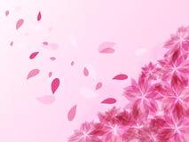 Fondo astratto con i fiori ed i petali rosa di volo Immagine Stock Libera da Diritti